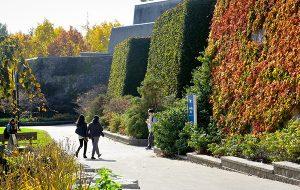 Autumn foliage on U of T campus